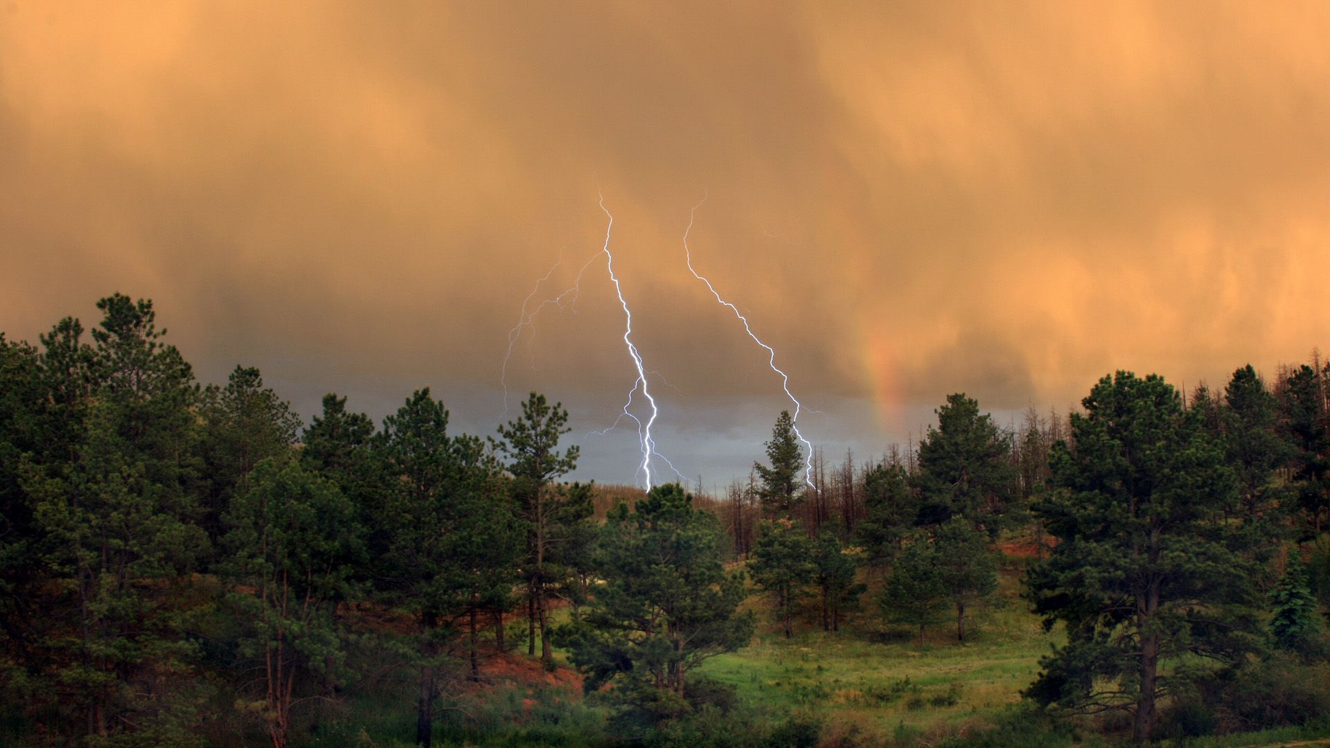 forest, Thunderstorm, lightning, wallpapers , Pc backgrounds, free photos - HD wallpaper desktop backgrounds