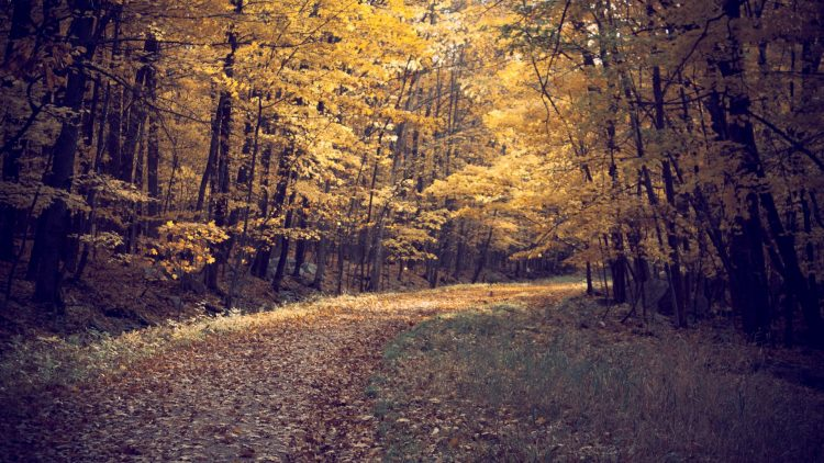 forest, autumn, leaves, Trees, road, wallpapers , Pc backgrounds, free photos
