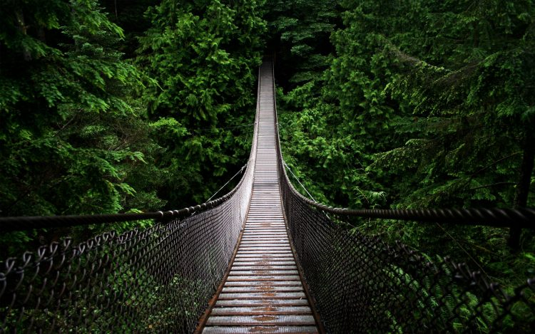 forest, bridge, pit, wallpapers , Pc backgrounds, free photos