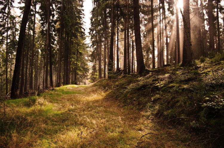 forest, light, wallpapers , Pc backgrounds, free photos