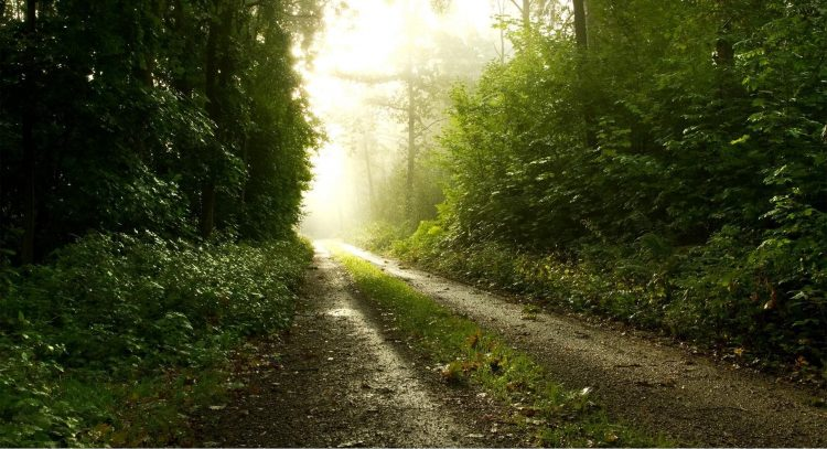 forest, road, light, Rays of light, wallpapers , Pc backgrounds, free photos