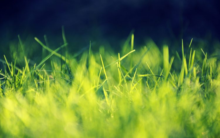 grass, greens, wallpapers , Pc backgrounds, free photos