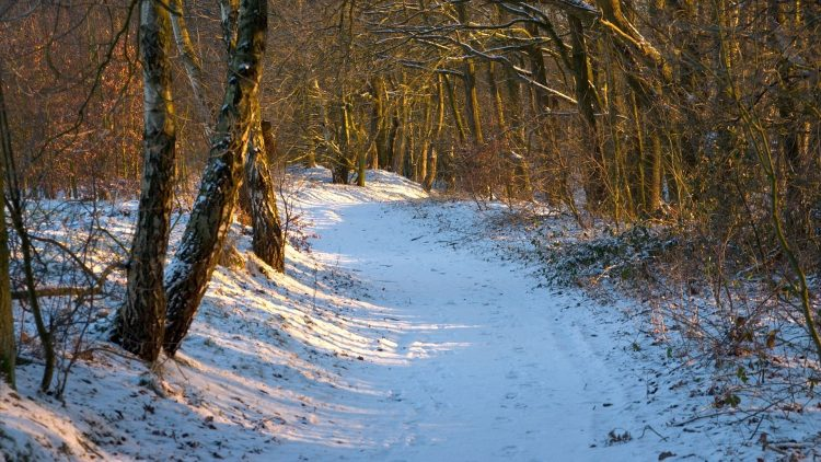 grove, footpath, day, winter, rays, sun, wallpapers , Pc backgrounds, free photos