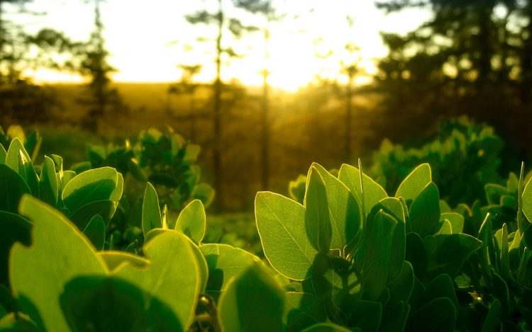 leaves, greens, light, wallpapers , Pc backgrounds, free photos