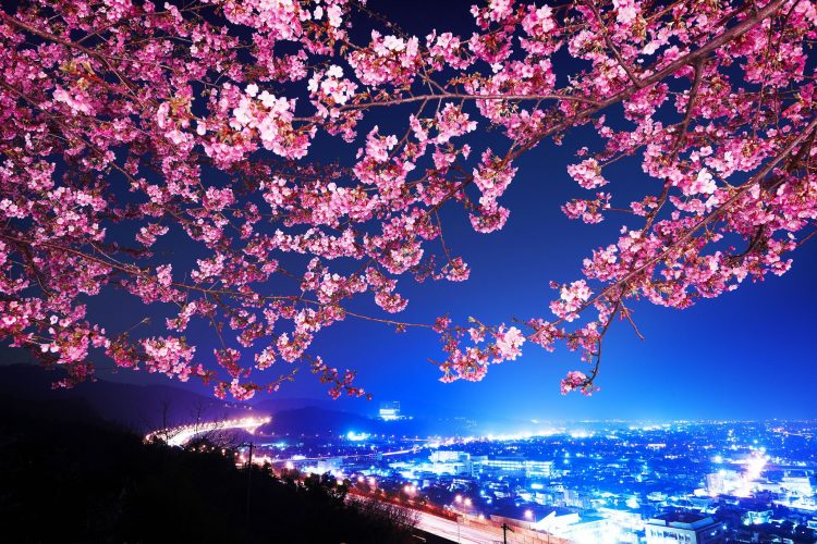 japan, Japan, sakura, night city, panorama, wallpapers , Pc backgrounds, free photos