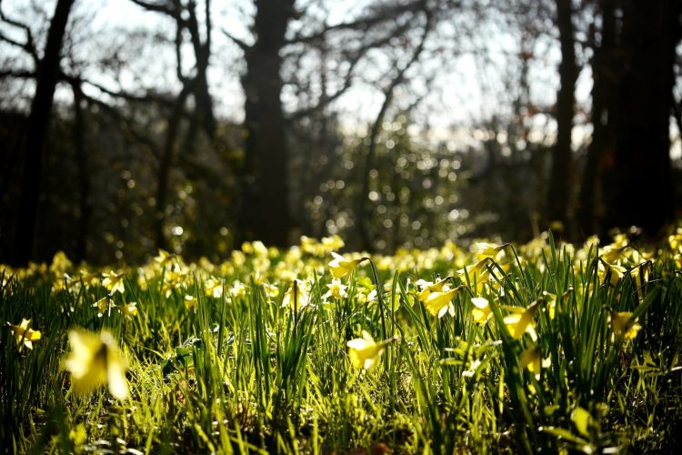 nature, Plants, meadow, spring, grass, Flowers, wallpapers , Pc backgrounds, free photos