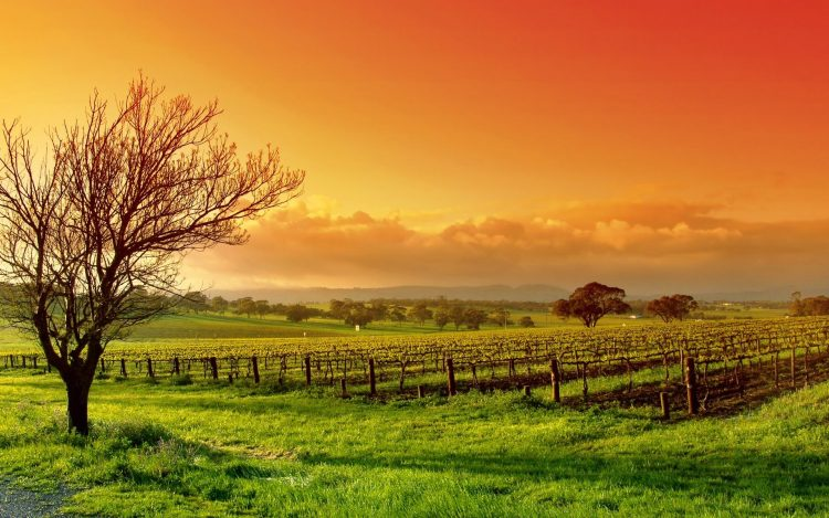 landscape, tree, field, sky, clouds, wallpapers , Pc backgrounds, free photos