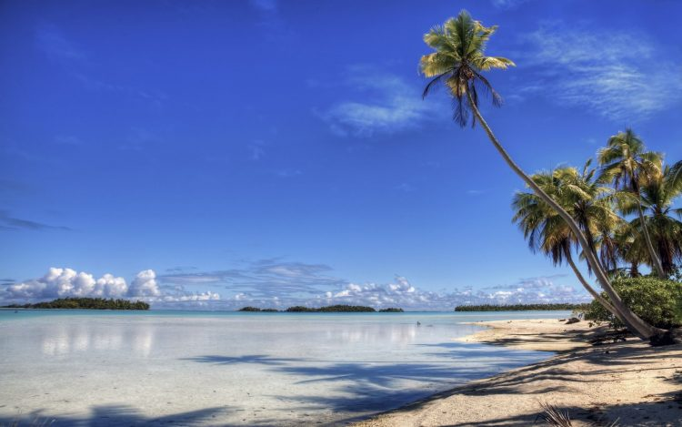 palm, Island, beach, coast, paradise, wallpapers , Pc backgrounds, free photos