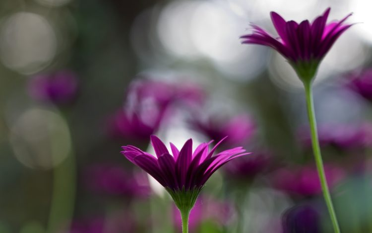 Plants, Flowers, bloom, stems, petals, wallpapers , Pc backgrounds, free photos