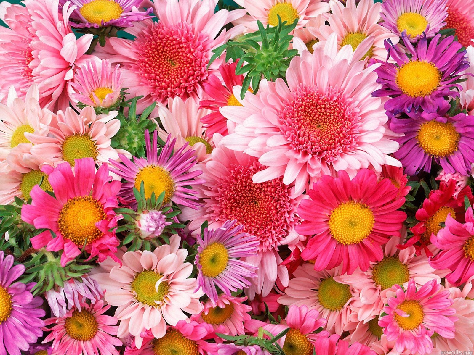 colorful flowers, nice, dream, wallpapers , Pc backgrounds, free photos - HD wallpaper desktop backgrounds