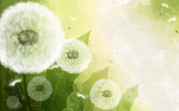 dandelion, transparent, nature, wallpapers , Pc backgrounds, free photos