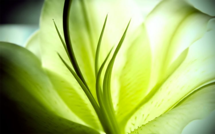 picture, macro, flower, wallpapers , Pc backgrounds, free photos
