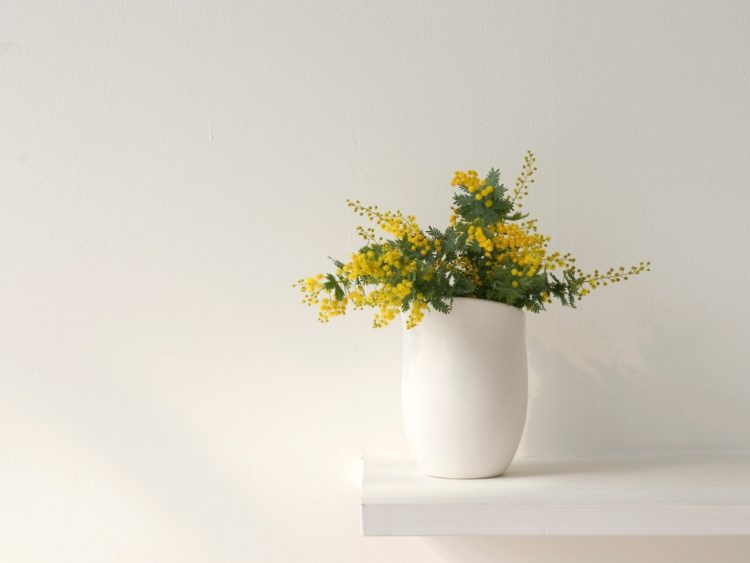 vase, mimosa, shelf, wall, Flowers, wallpapers , Pc backgrounds, free photos