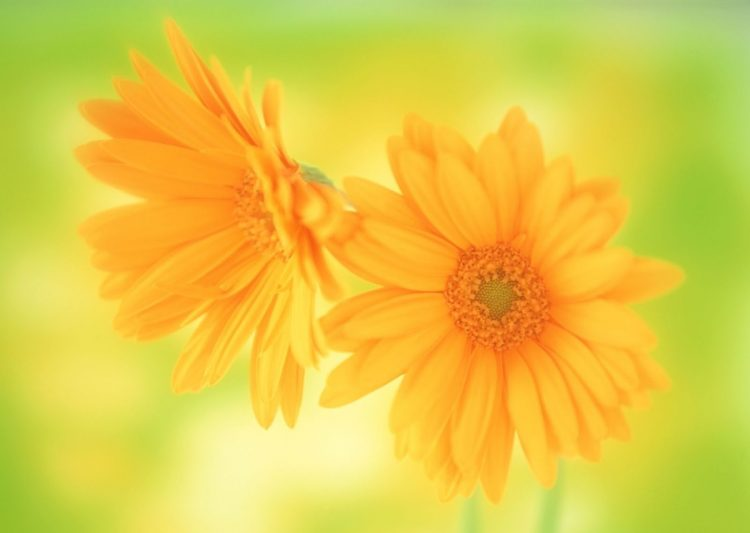 Flowers, macro, oranzhevyee, wallpapers , Pc backgrounds, free photos