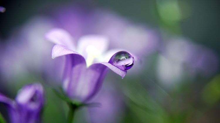 flower, Plants, drops, drop, macro, nature, wallpapers , Pc backgrounds, free photos