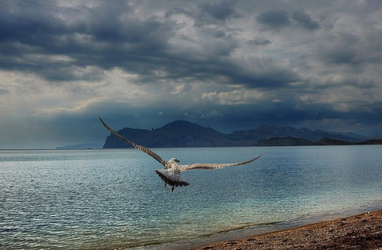 Crimea, black, sea, seagull, beach, Mountains, wallpapers , Pc backgrounds, free photos