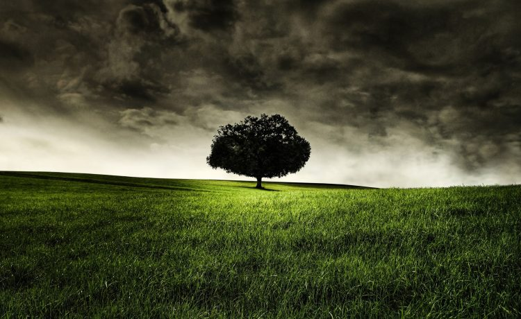 Trees, loneliness, grass, nature, wallpapers , Pc backgrounds, free photos