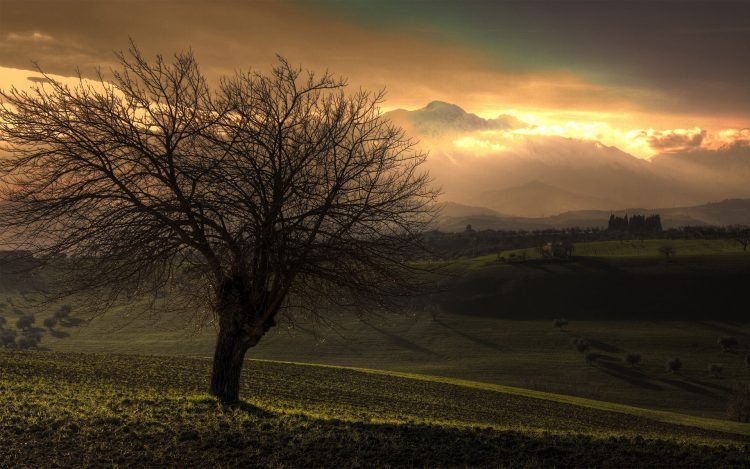 Trees, nature, Landscapes, photo, wallpapers , Pc backgrounds, free photos