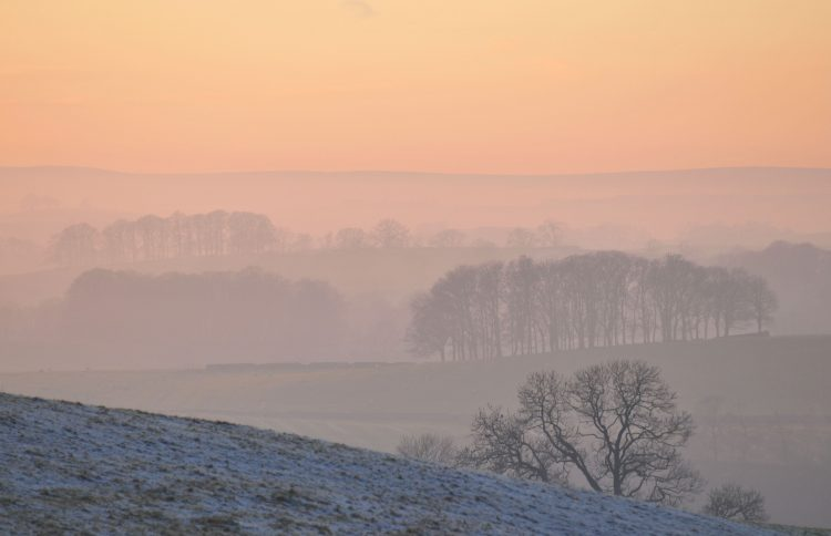 cold, frost, hills, fog, morning, Trees, wallpapers , Pc backgrounds, free photos