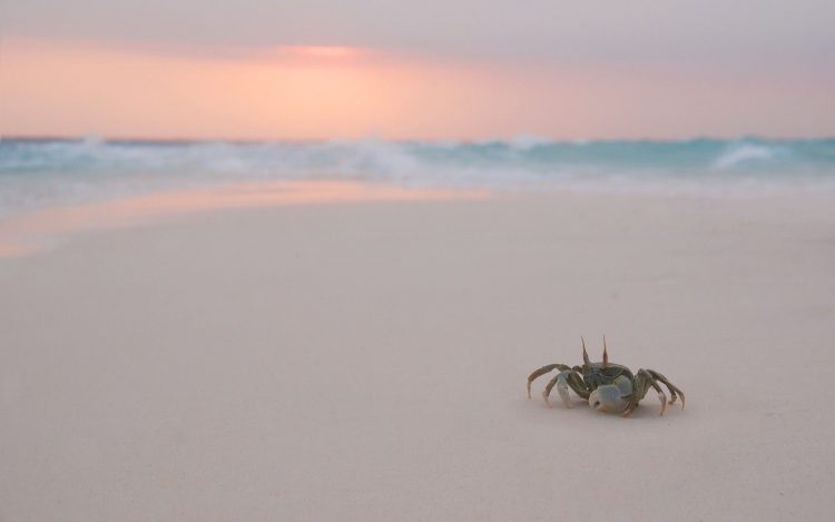 crab, beach, evening, wallpapers , Pc backgrounds, free photos