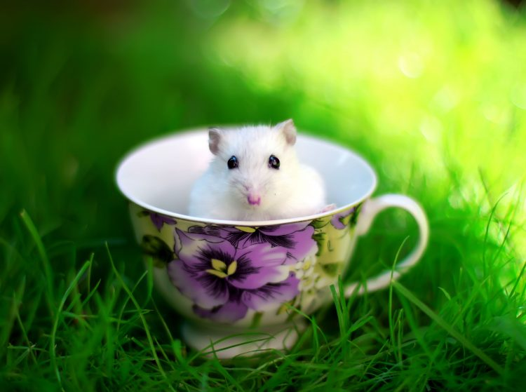 cup, grass, mouse, meadow, summer, wallpapers , Pc backgrounds, free photos