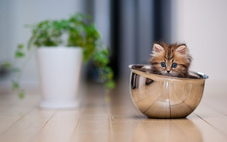 cup, kitten, dishes, wallpapers , Pc backgrounds, free photos