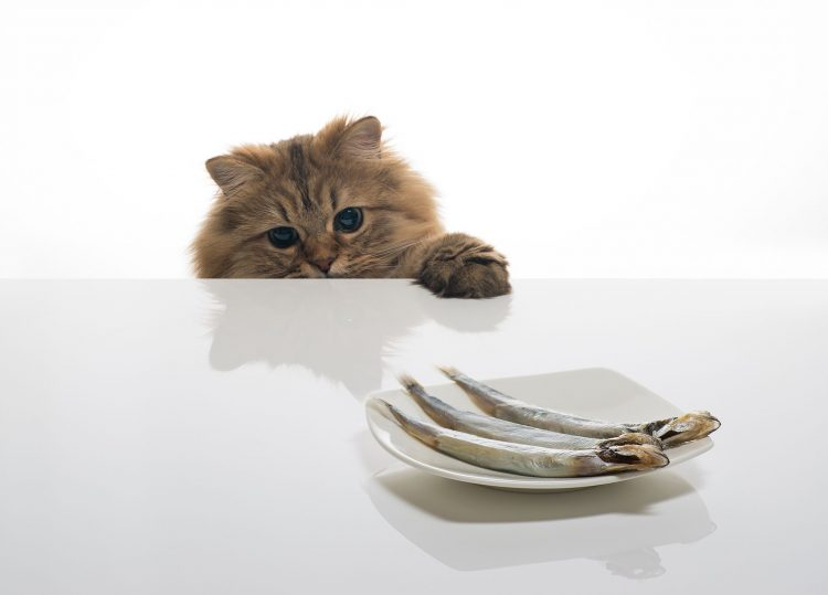 daisy, © benjamin torode, fish, cat, table, wallpapers , Pc backgrounds, free photos