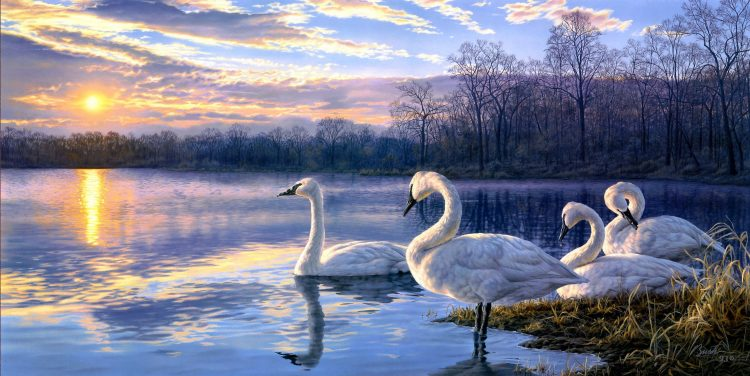 darrell bush, Art, Swans, lake, sunset, landscape, wallpapers , Pc backgrounds, free photos