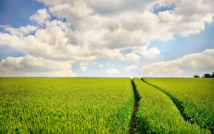 field, road, sky, traces, nature, photo, wallpapers , Pc backgrounds, free photos