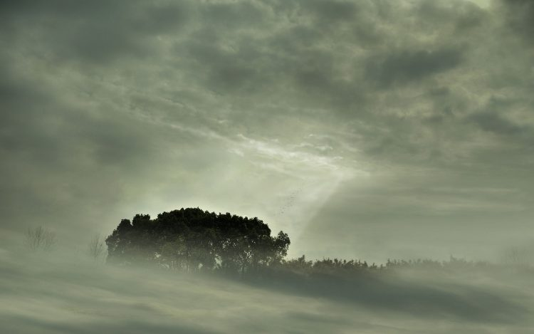 fog, Landscapes, Trees, forest, view, wallpapers , Pc backgrounds, free photos