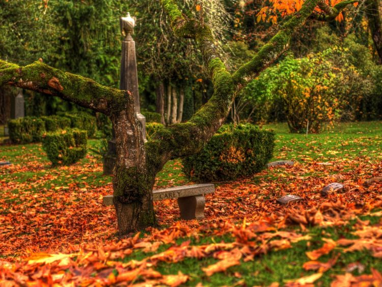 leaves, autumn, cemetery, Monuments, wallpapers , Pc backgrounds, free photos