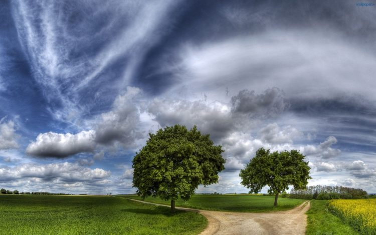 road, fork, grass, Trees, pathway, choice, sky, wallpapers , Pc backgrounds, free photos
