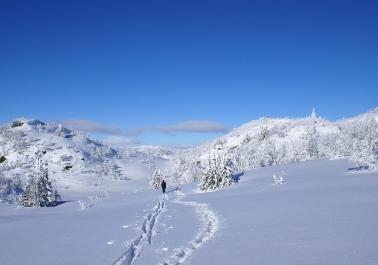 winter, skier, dog, snow, sun, shine, wallpapers , Pc backgrounds, free photos